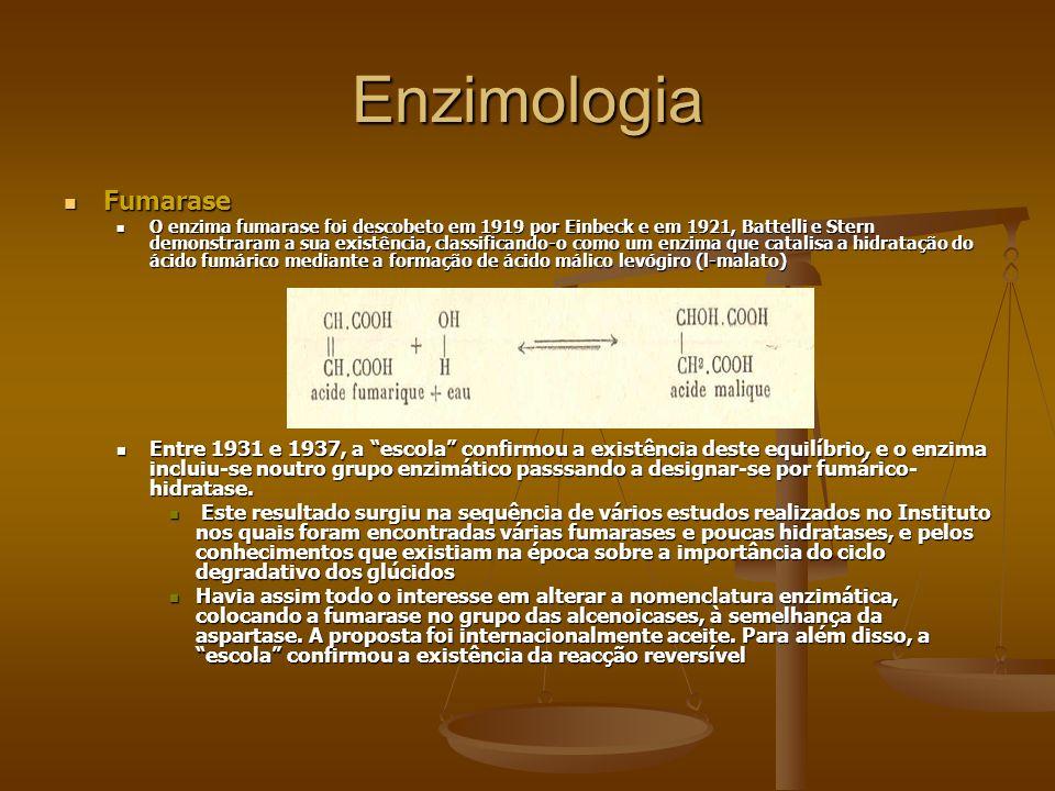 Enzimologia Fumarase Fumarase O enzima fumarase foi descobeto em 1919 por Einbeck e em 1921, Battelli e Stern demonstraram a sua existência, classific