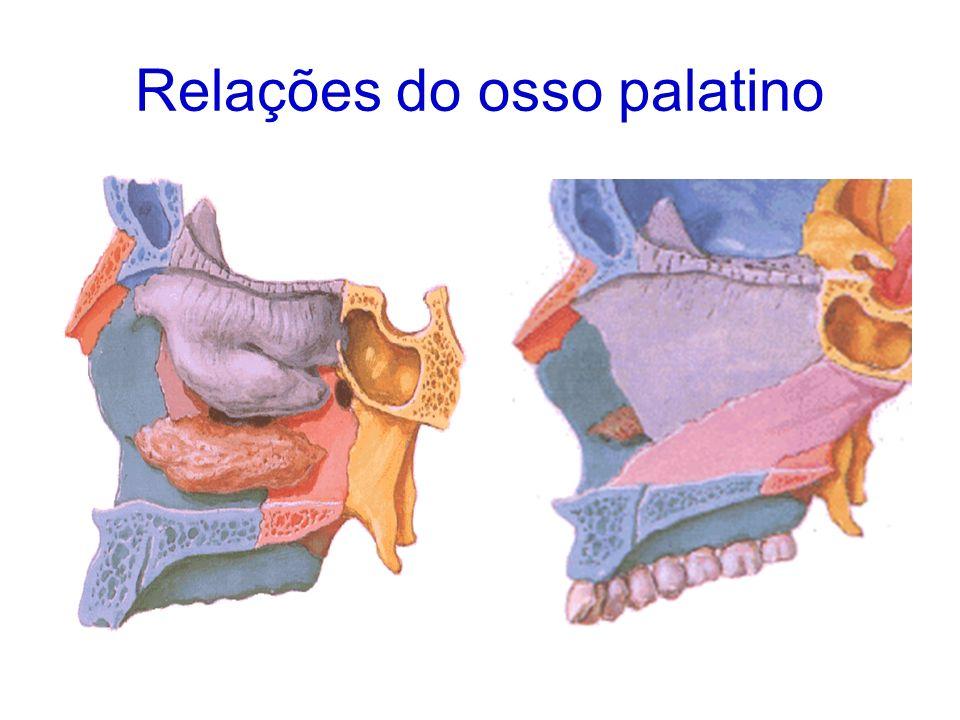 Relações do osso palatino