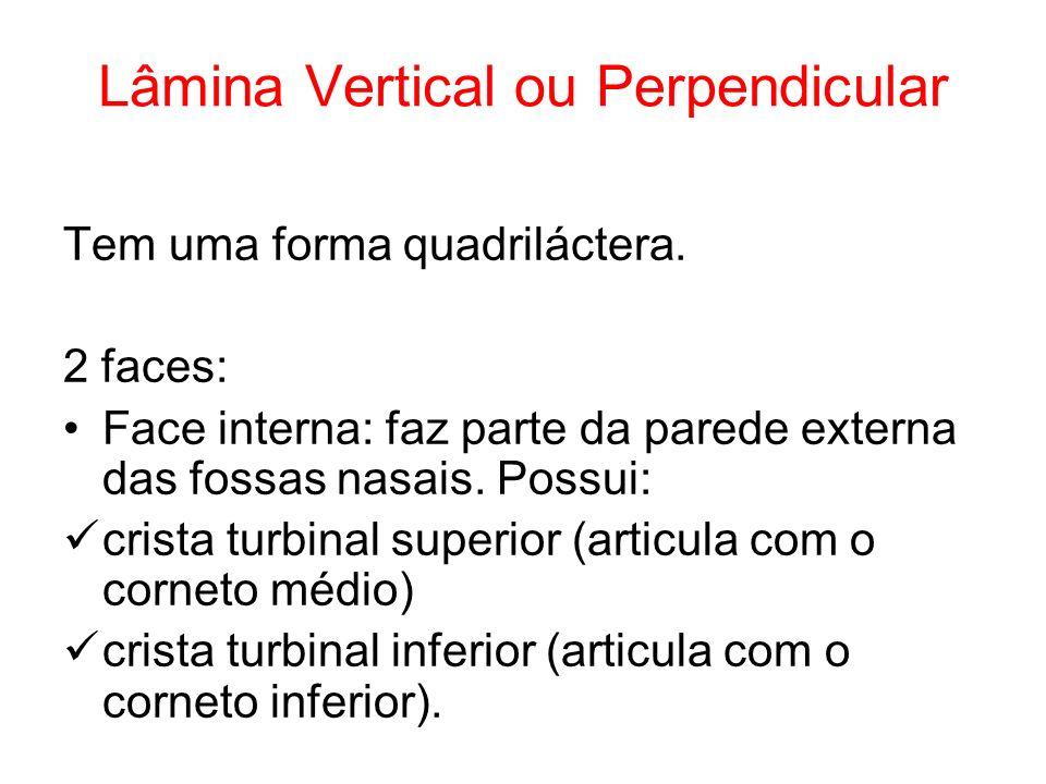 Lâmina Vertical ou Perpendicular Tem uma forma quadriláctera. 2 faces: Face interna: faz parte da parede externa das fossas nasais. Possui: crista tur