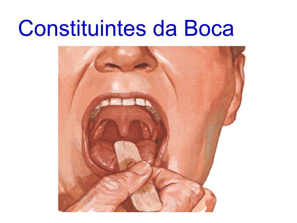 Cavidade Bucal Cavidade bucal divide-se: vestíbulo cavidade bucal propriamente dita Vestíbulo espaço situado entre os lábios e as bochechas, externamente e os dentes e as gengivas, internamente.