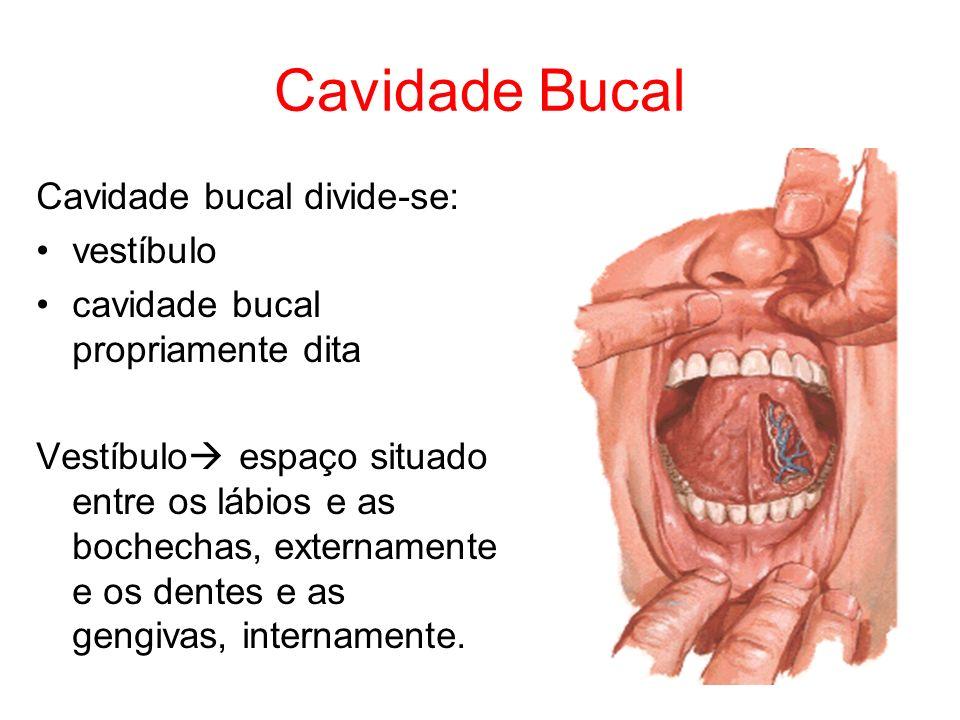 Cavidade Bucal Cavidade bucal divide-se: vestíbulo cavidade bucal propriamente dita Vestíbulo espaço situado entre os lábios e as bochechas, extername