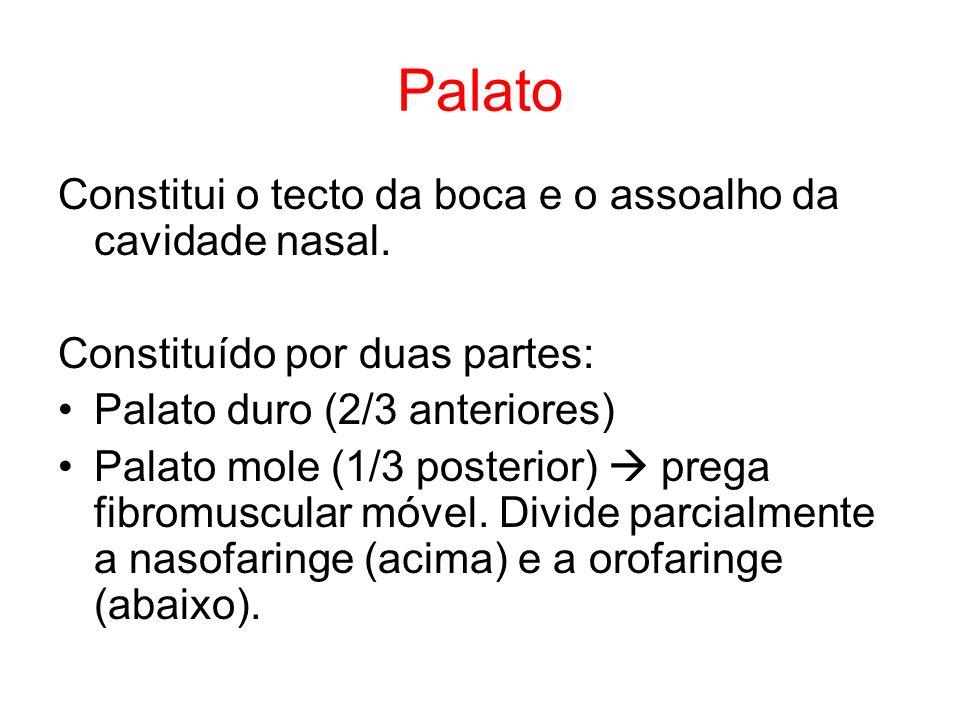 Palato Constitui o tecto da boca e o assoalho da cavidade nasal. Constituído por duas partes: Palato duro (2/3 anteriores) Palato mole (1/3 posterior)
