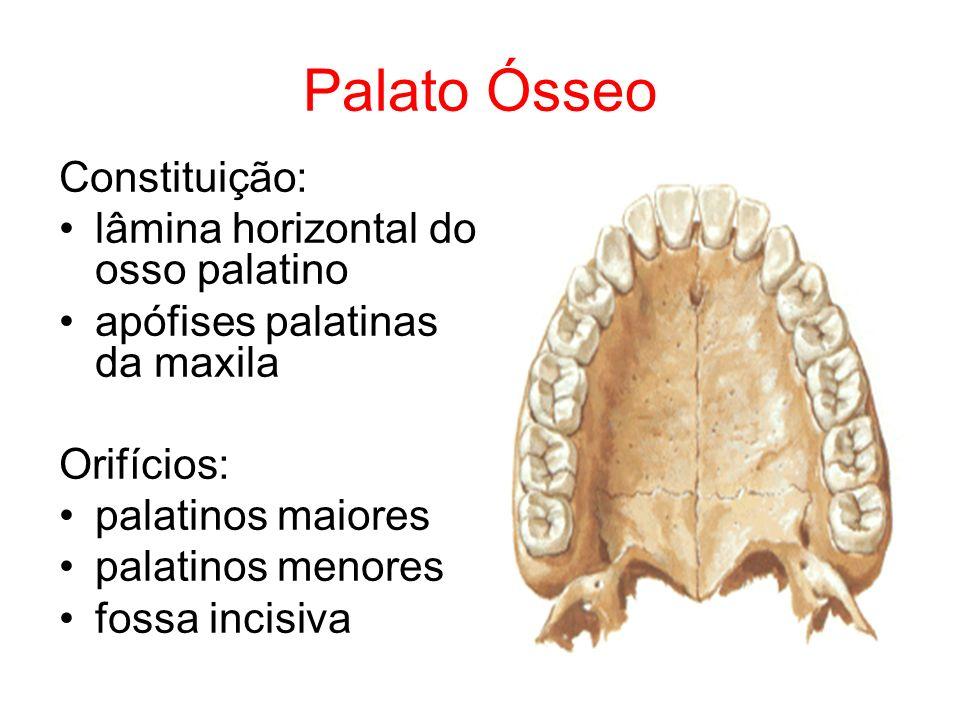 Palato Ósseo Constituição: lâmina horizontal do osso palatino apófises palatinas da maxila Orifícios: palatinos maiores palatinos menores fossa incisi