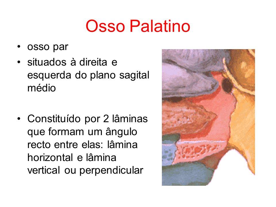 Osso Palatino osso par situados à direita e esquerda do plano sagital médio Constituído por 2 lâminas que formam um ângulo recto entre elas: lâmina ho
