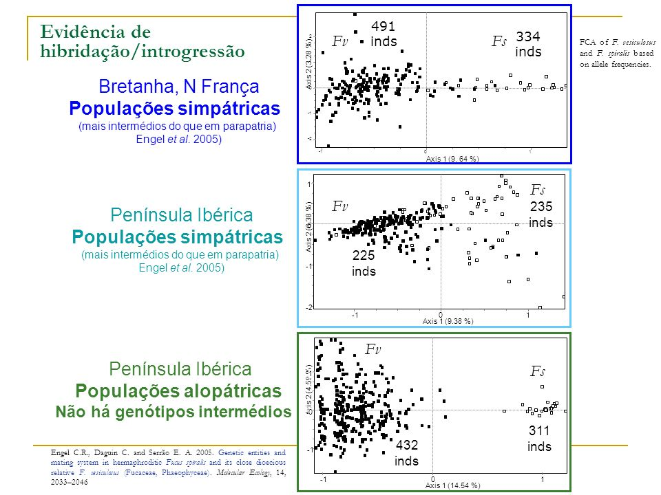 Evidência de hibridação/introgressão Engel C.R., Daguin C. and Serrão E. A. 2005. Genetic entities and mating system in hermaphroditic Fucus spiralis