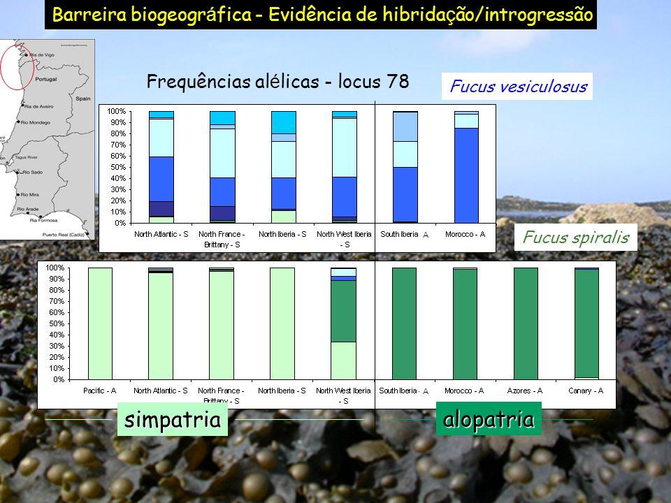 Fucus spiralis Fucus vesiculosus Frequências al é licas - locus 78 AA Barreira biogeogr á fica - Evidência de hibrida ç ão/introgressãoalopatria simpa