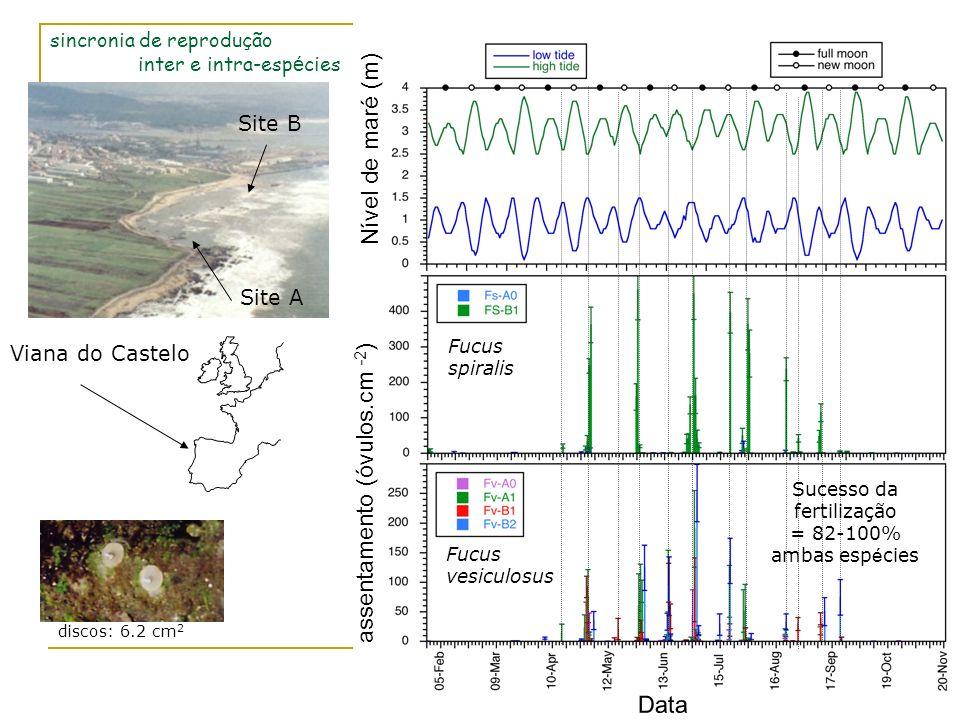 assentamento (óvulos.cm -2 ) Nível de maré (m) Data Fucus spiralis Fucus vesiculosus Viana do Castelo Site B Site A discos: 6.2 cm 2 Sucesso da fertil