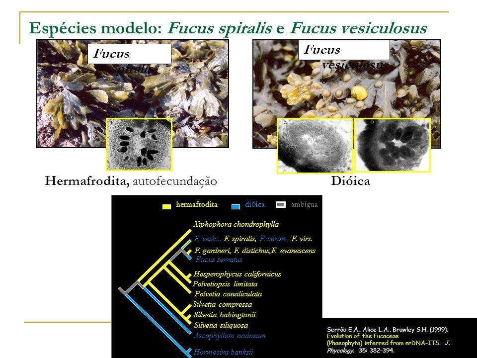 Distribuição geográfica de F.spiralis e F.