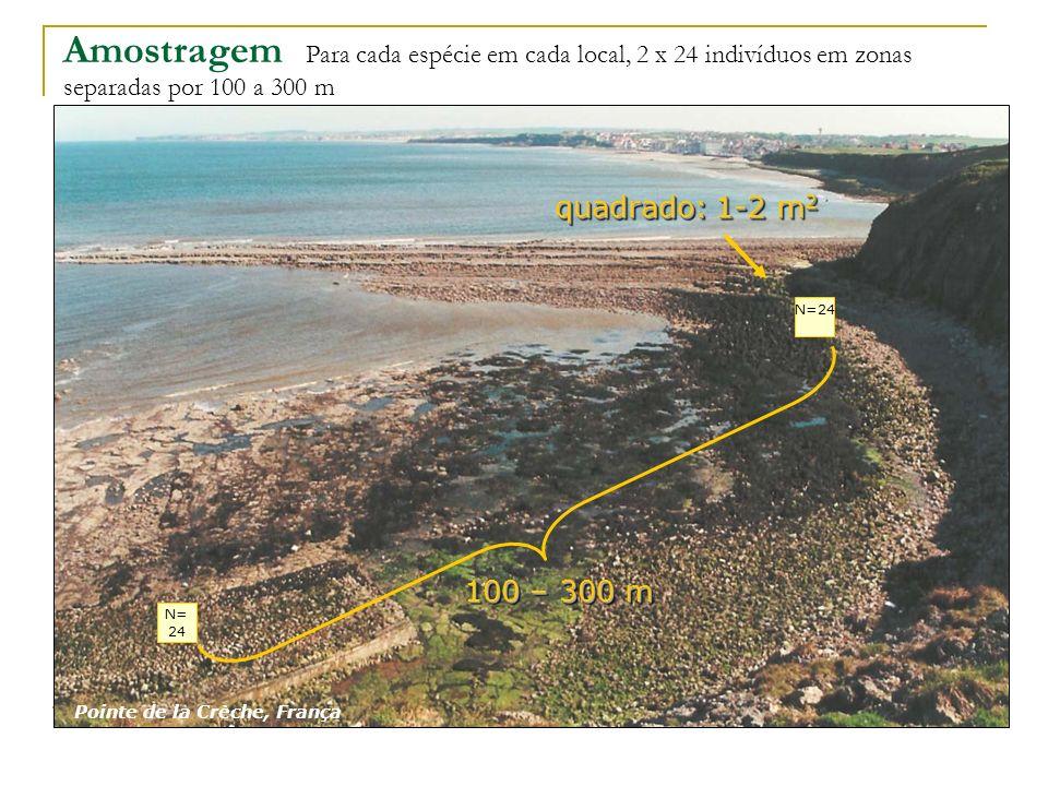 Amostragem Para cada espécie em cada local, 2 x 24 indivíduos em zonas separadas por 100 a 300 m 100 – 300 m N= 24 Pointe de la Crèche, França quadrad