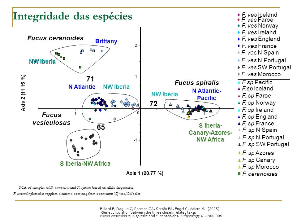 Diferenciação populacional Relationships among samples for each species, unrooted NJ tree, pairwise Neis distances.