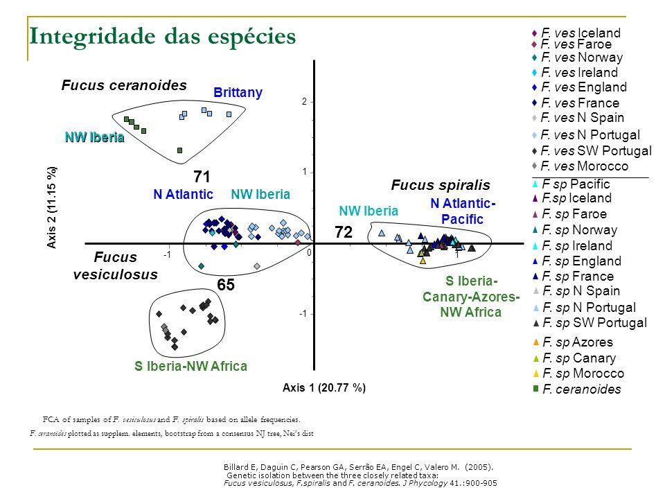 Integridade das espécies Axis 1 (20.77 %) Axis 2 (11.15 %) 1 0 2 1 NW Iberia Brittany Fucus ceranoides Fucus spiralis Fucus vesiculosus N Atlantic NW