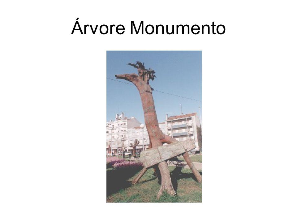 Árvore Monumento