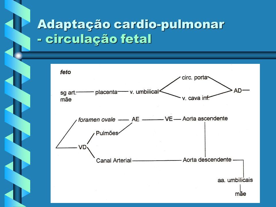 Adaptação cardio-pulmonar - circulação fetal