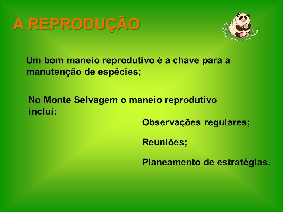 A REPRODUÇÃO Um bom maneio reprodutivo é a chave para a manutenção de espécies; No Monte Selvagem o maneio reprodutivo incluí: Observações regulares;