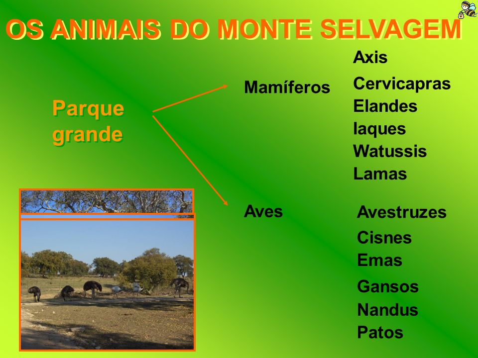 A REPRODUÇÃO Um bom maneio reprodutivo é a chave para a manutenção de espécies; No Monte Selvagem o maneio reprodutivo incluí: Observações regulares; Reuniões; Planeamento de estratégias.
