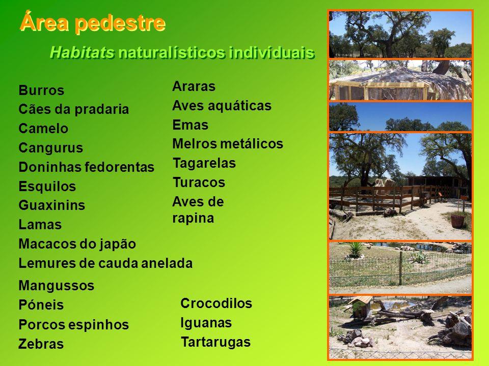 Habitats naturalísticos indivíduais Área pedestre Crocodilos Iguanas Tartarugas Burros Cães da pradaria Camelo Cangurus Doninhas fedorentas Esquilos G