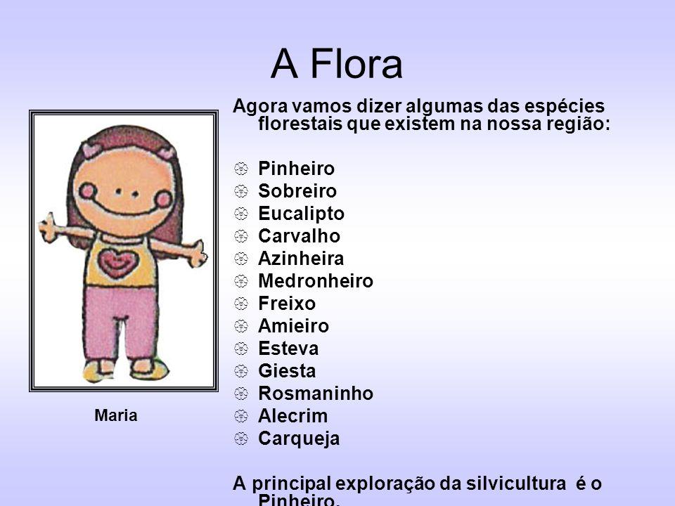 A Flora Agora vamos dizer algumas das espécies florestais que existem na nossa região: Pinheiro Sobreiro Eucalipto Carvalho Azinheira Medronheiro Frei
