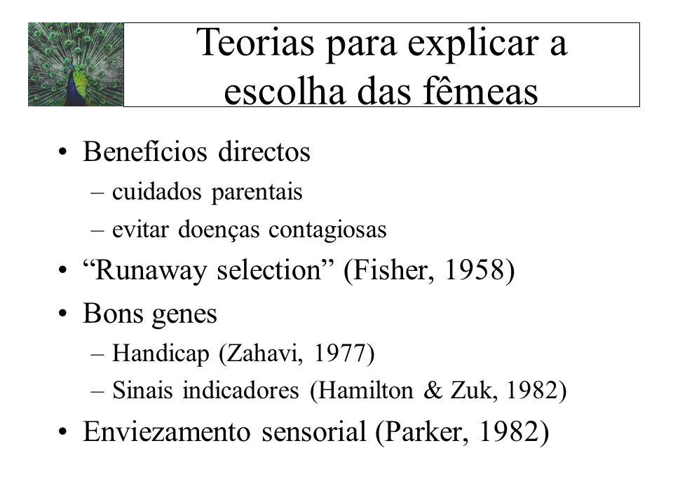 Benefícios directos –cuidados parentais –evitar doenças contagiosas Runaway selection (Fisher, 1958) Bons genes –Handicap (Zahavi, 1977) –Sinais indic