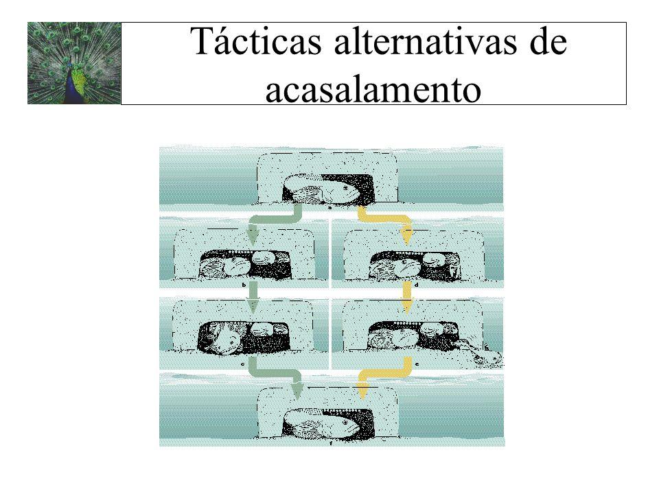Tácticas alternativas de acasalamento