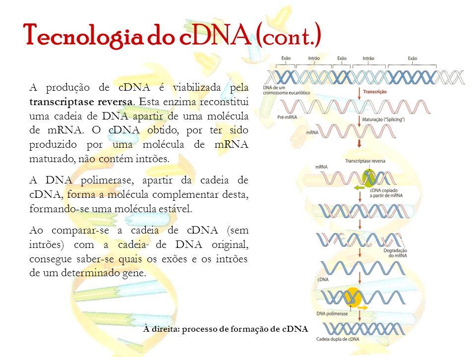 Tecnologia do cDNA (cont.) A produção de cDNA é viabilizada pela transcriptase reversa. Esta enzima reconstitui uma cadeia de DNA apartir de uma moléc