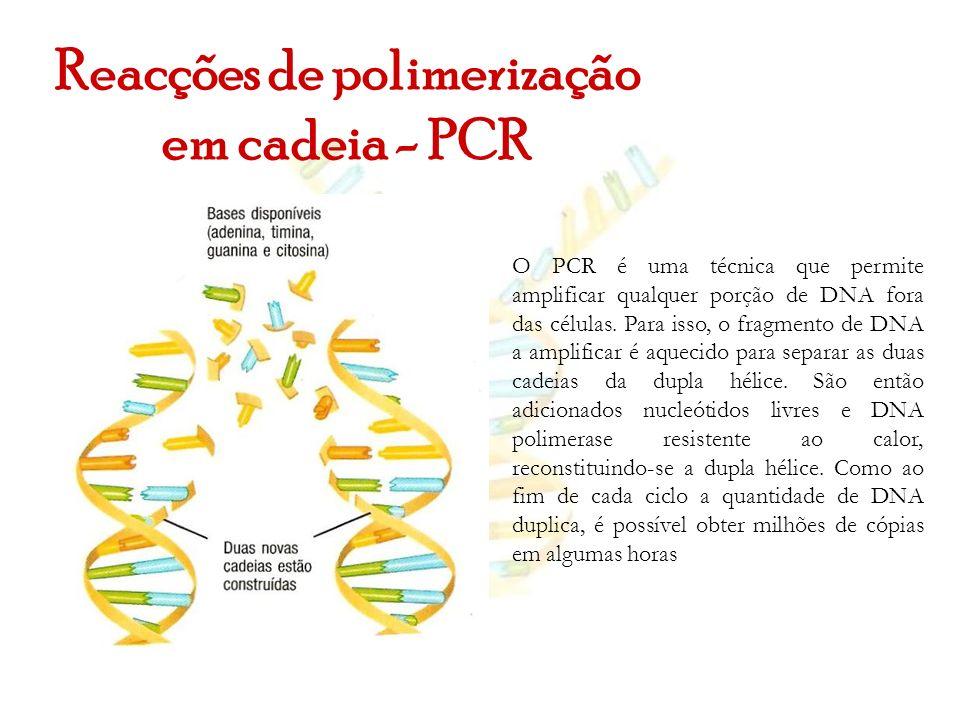 Reacções de polimerização em cadeia - PCR O PCR é uma técnica que permite amplificar qualquer porção de DNA fora das células. Para isso, o fragmento d