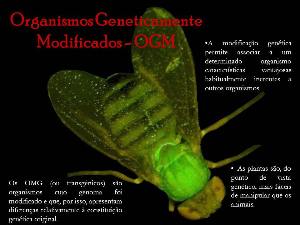 Organismos Geneticamente Modificados - OGM As plantas são, do ponto de vista genético, mais fáceis de manipular que os animais. A modificação genética