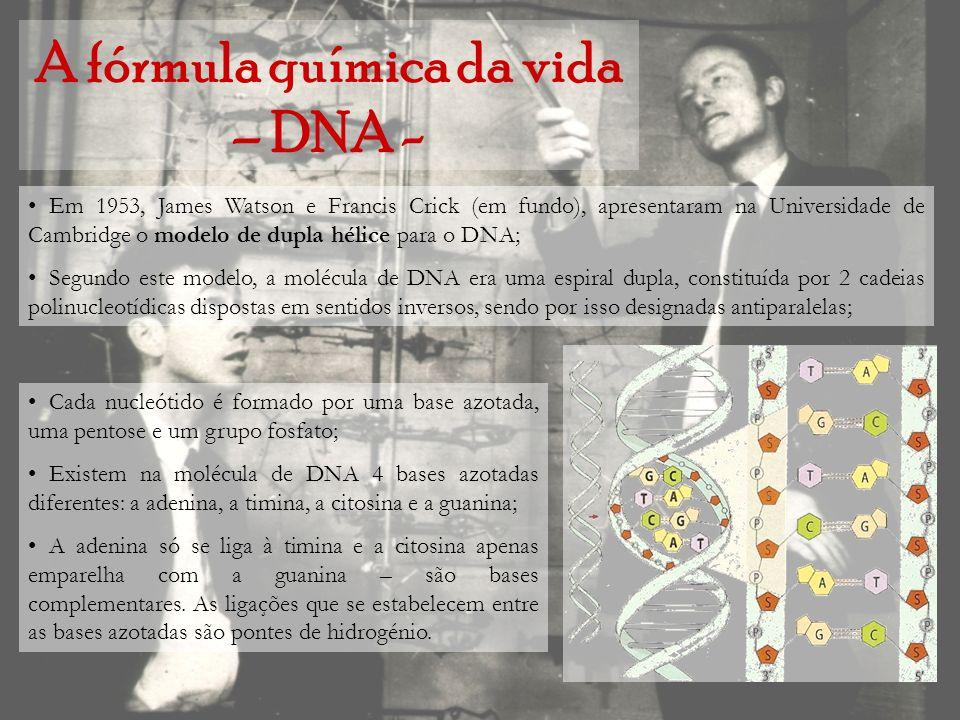 A fórmula química da vida – DNA - Em 1953, James Watson e Francis Crick (em fundo), apresentaram na Universidade de Cambridge o modelo de dupla hélice
