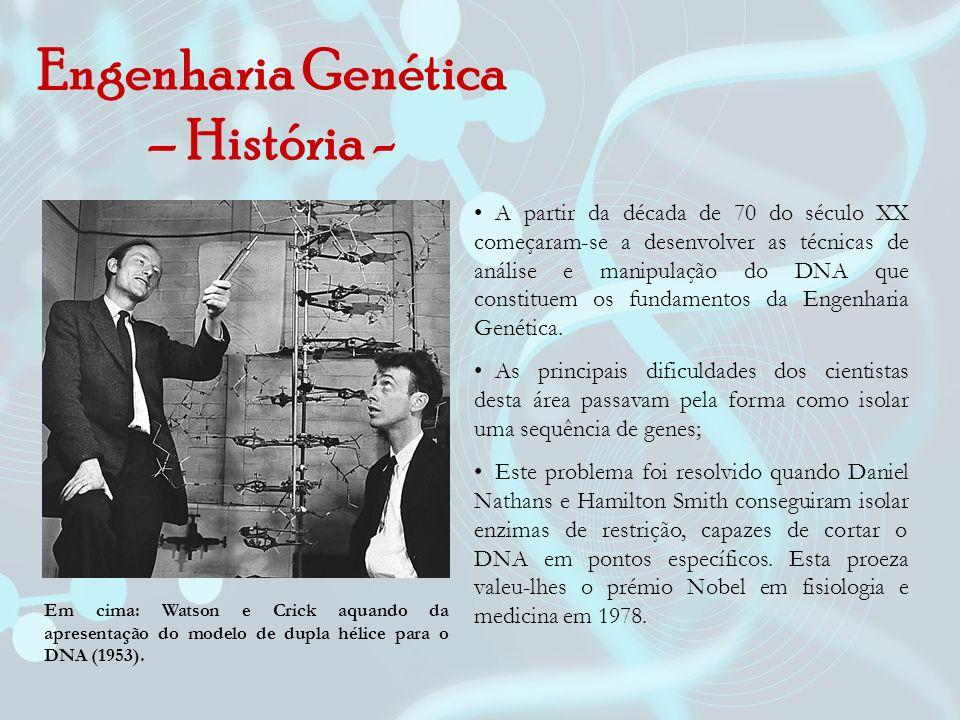 Engenharia Genética – História - Em cima: Watson e Crick aquando da apresentação do modelo de dupla hélice para o DNA (1953). A partir da década de 70