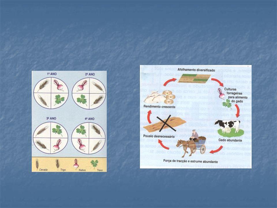 O CRESCIMENTO DEMOGRÁFICO O fim das fomes O aumento da produtividade permitiu maior abundância de alimentos.