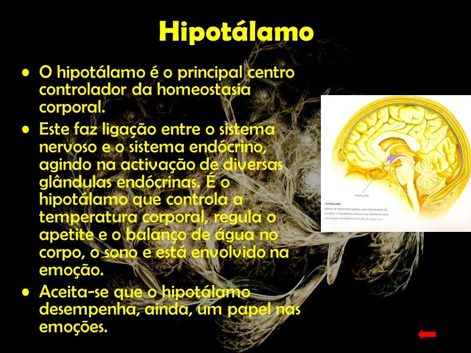 O Tronco Encefálico O tronco encefálico, que se encontra na continuidade da medula espinal, situada mais abaixo, é atravessado por vias nervosas ascendentes e descendentes que interligam a medula e o cérebro.