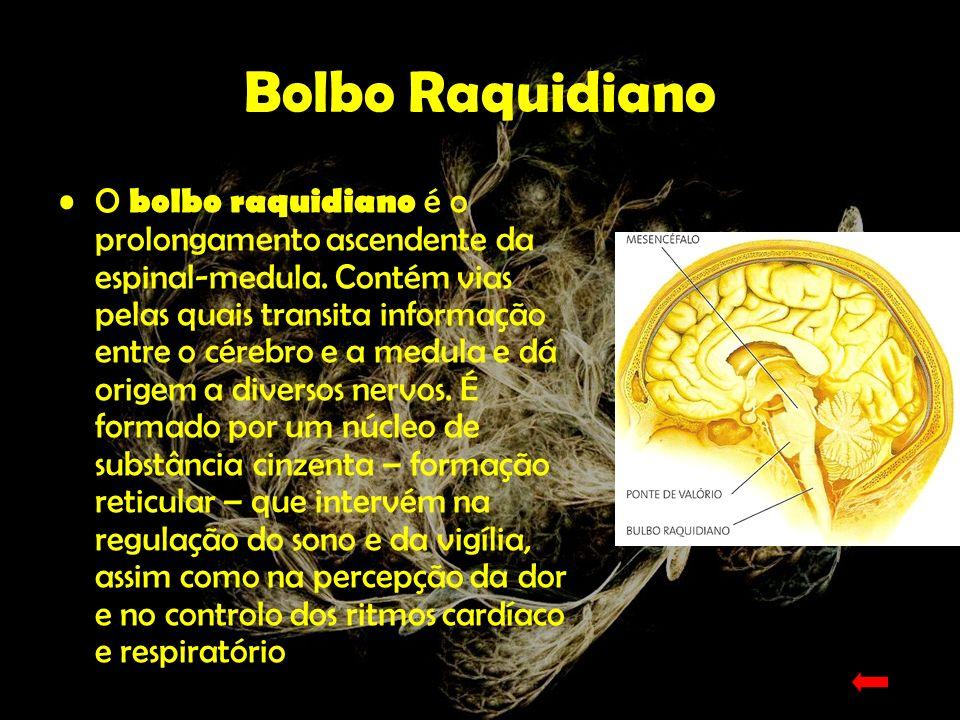 Cerebelo O cerebelo está unido ao tronco encefálico por três pares de pedúnculos e a sua forma apresenta uma certa semelhança com a de uma couve-flor.