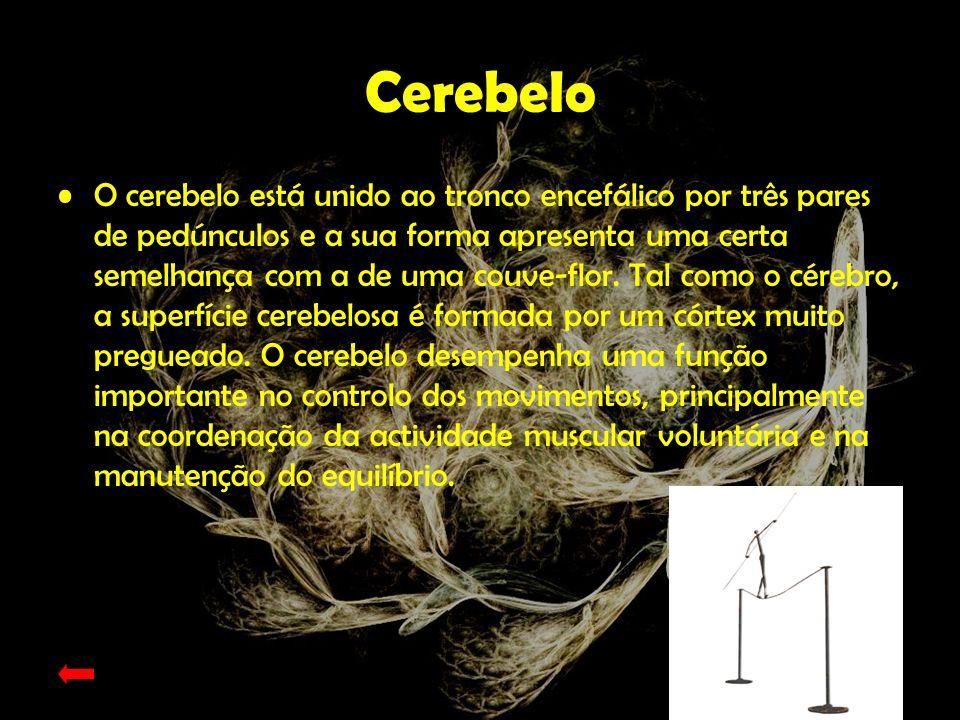 Espinal Medula A medula espinal apresenta-se como um cordão esbranquiçado com cerca de 50 cm de comprimento e 1cm de diâmetro.