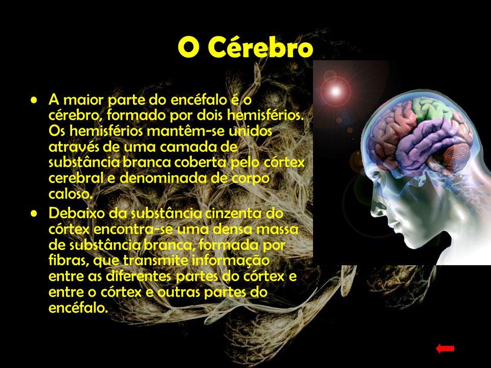 O córtex cerebral Centro de controlo e processamento da informação.
