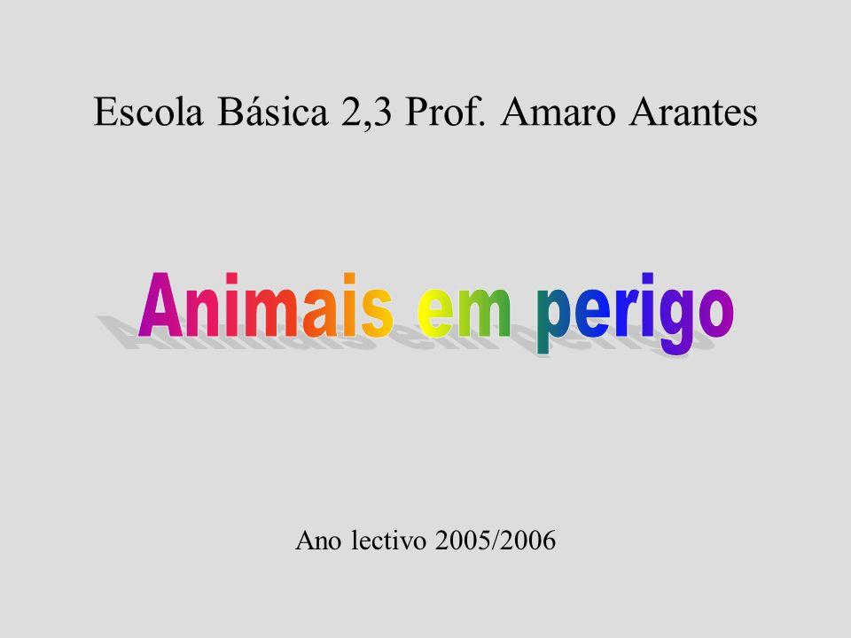 Escola Básica 2,3 Prof. Amaro Arantes Ano lectivo 2005/2006