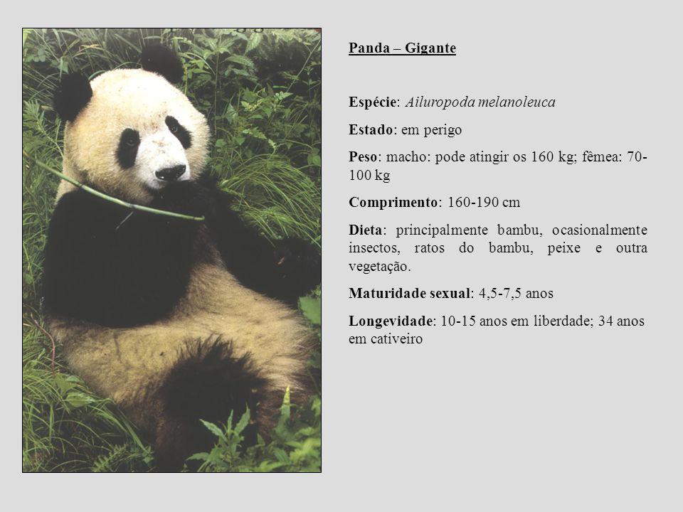 Panda – Gigante Espécie: Ailuropoda melanoleuca Estado: em perigo Peso: macho: pode atingir os 160 kg; fêmea: 70- 100 kg Comprimento: 160-190 cm Dieta