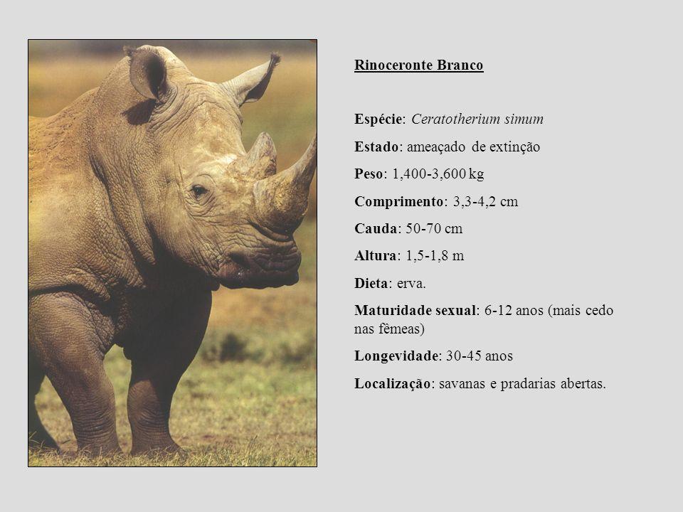 Rinoceronte Branco Espécie: Ceratotherium simum Estado: ameaçado de extinção Peso: 1,400-3,600 kg Comprimento: 3,3-4,2 cm Cauda: 50-70 cm Altura: 1,5-