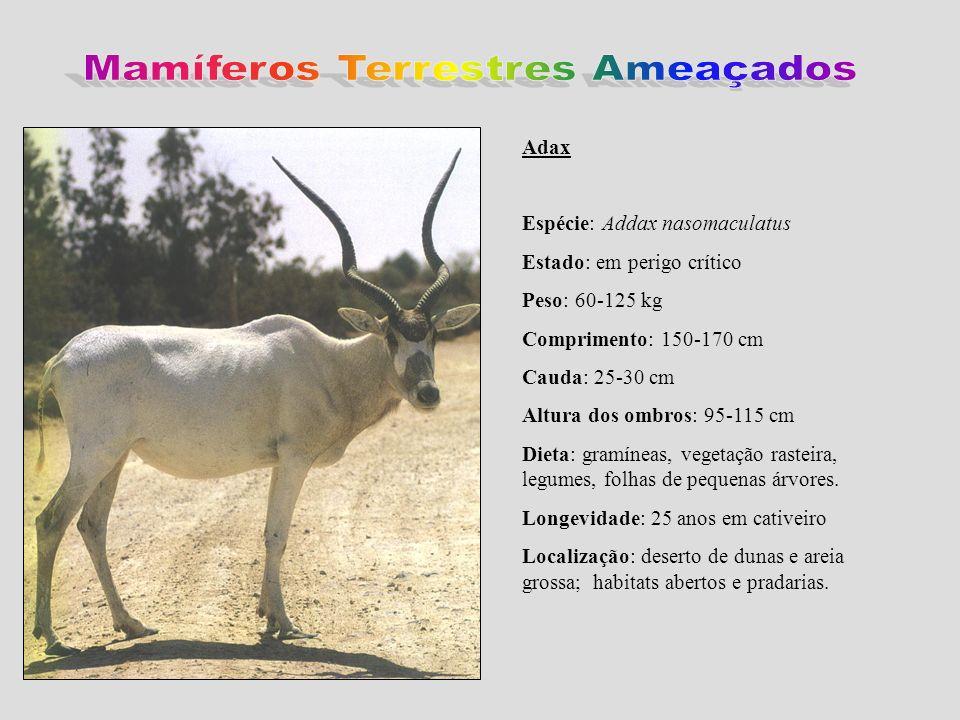 Adax Espécie: Addax nasomaculatus Estado: em perigo crítico Peso: 60-125 kg Comprimento: 150-170 cm Cauda: 25-30 cm Altura dos ombros: 95-115 cm Dieta