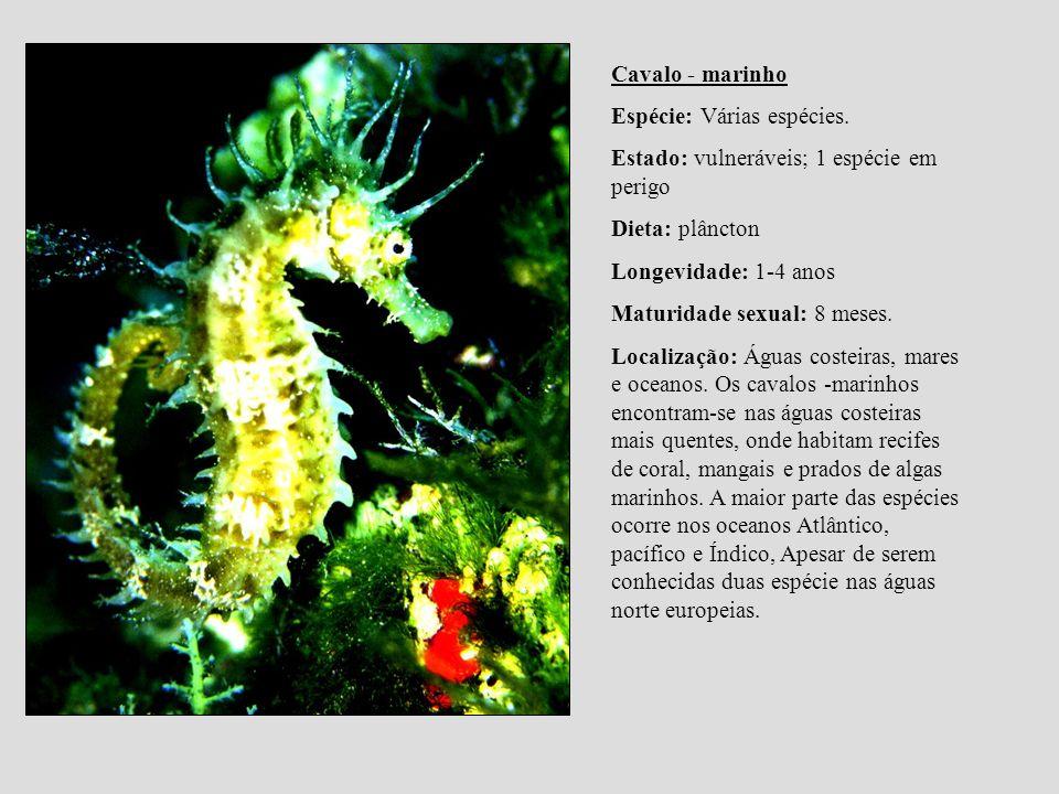 Cavalo - marinho Espécie: Várias espécies. Estado: vulneráveis; 1 espécie em perigo Dieta: plâncton Longevidade: 1-4 anos Maturidade sexual: 8 meses.