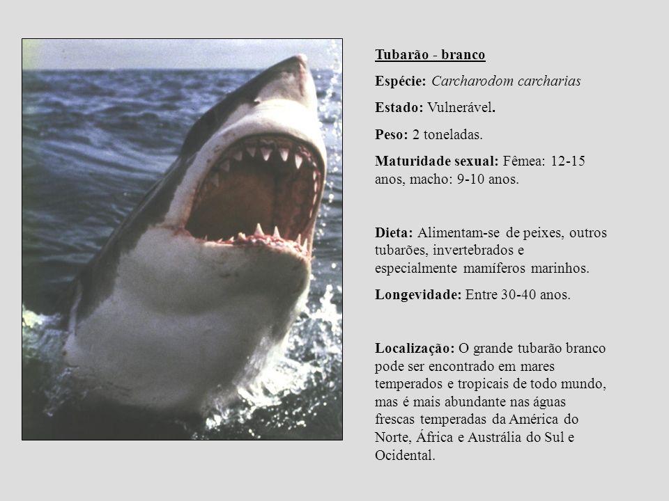 Tubarão - branco Espécie: Carcharodom carcharias Estado: Vulnerável. Peso: 2 toneladas. Maturidade sexual: Fêmea: 12-15 anos, macho: 9-10 anos. Dieta: