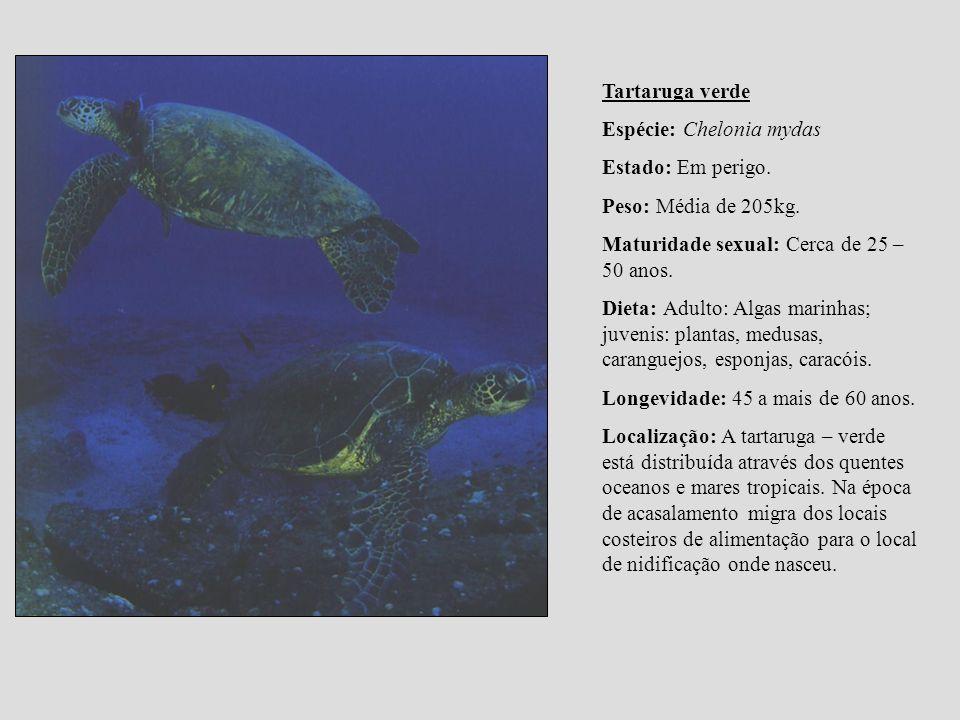 Tartaruga verde Espécie: Chelonia mydas Estado: Em perigo. Peso: Média de 205kg. Maturidade sexual: Cerca de 25 – 50 anos. Dieta: Adulto: Algas marinh