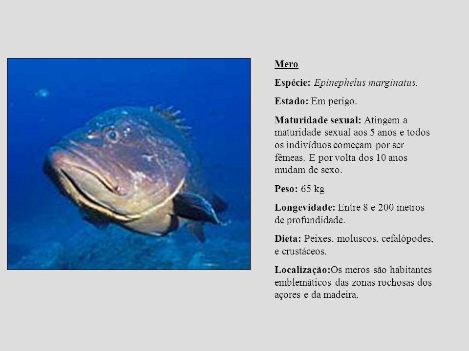 Mero Espécie: Epinephelus marginatus. Estado: Em perigo. Maturidade sexual: Atingem a maturidade sexual aos 5 anos e todos os indivíduos começam por s