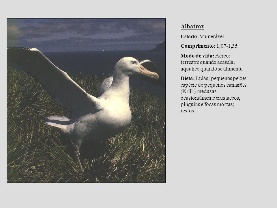 Albatroz Estado: Vulnerável Comprimento: 1,07-1,35 Modo de vida: Aéreo; terrestre quando acasala; aquático quando se alimenta Dieta: Lulas; pequenos p