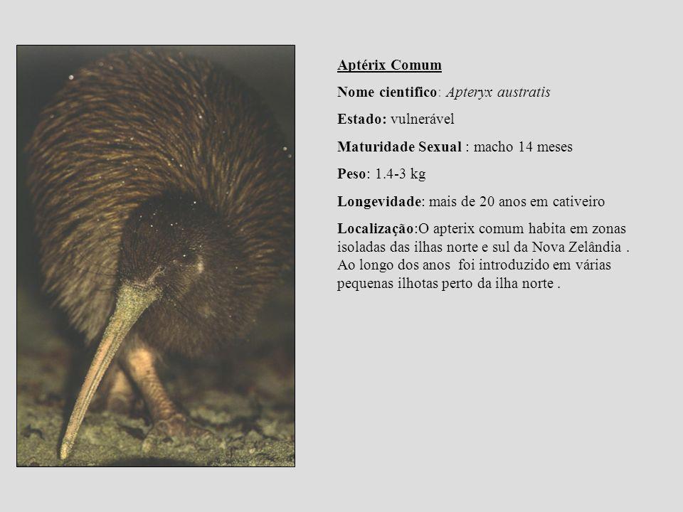 Aptérix Comum Nome cientifico: Apteryx austratis Estado: vulnerável Maturidade Sexual : macho 14 meses Peso: 1.4-3 kg Longevidade: mais de 20 anos em