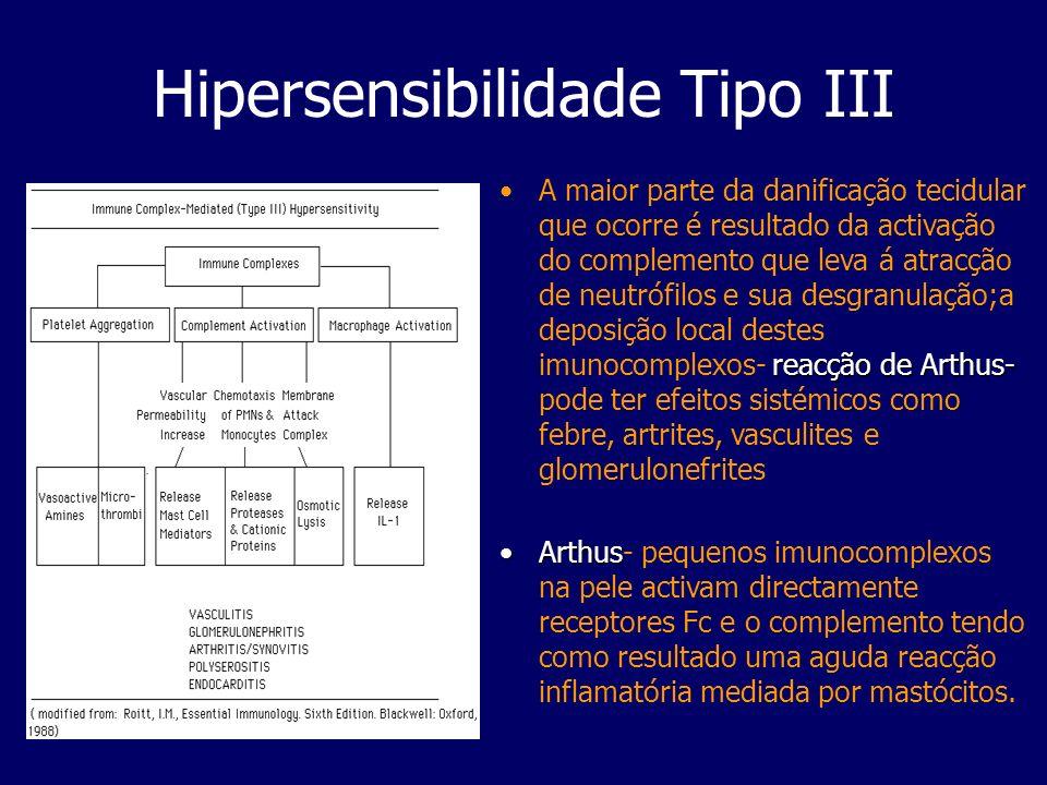 Hipersensibilidade Tipo III reacção de Arthus-A maior parte da danificação tecidular que ocorre é resultado da activação do complemento que leva á atr