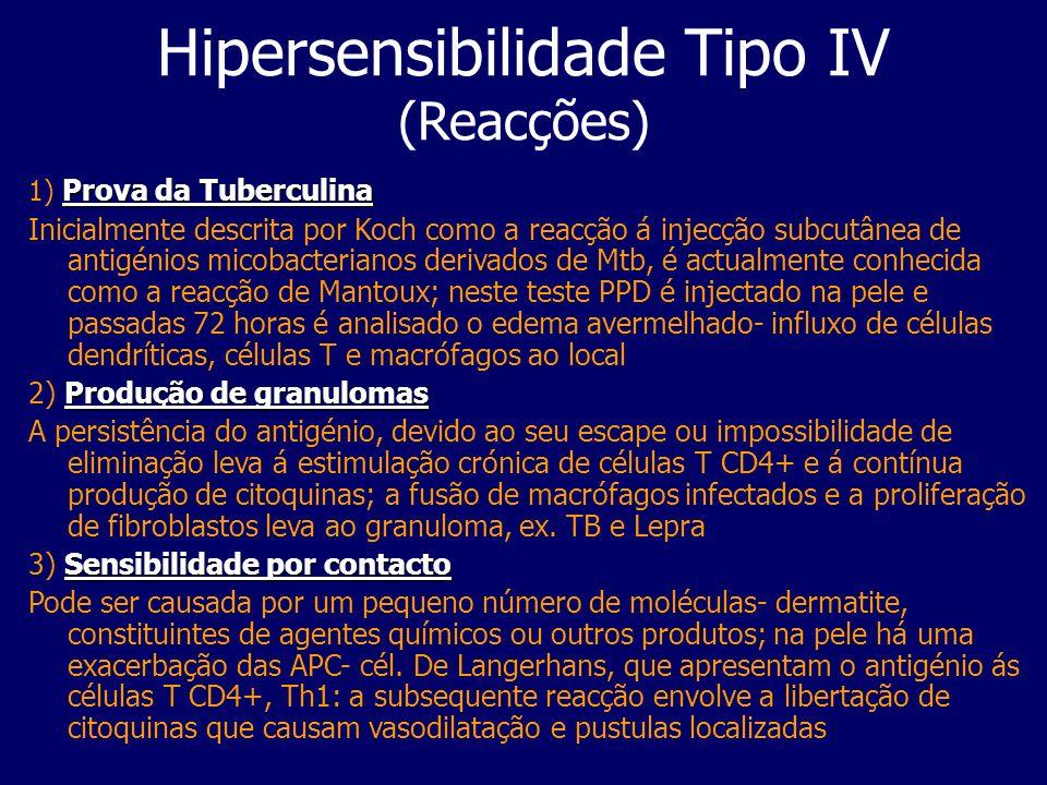 Hipersensibilidade Tipo IV (Reacções) Prova da Tuberculina 1) Prova da Tuberculina Inicialmente descrita por Koch como a reacção á injecção subcutânea