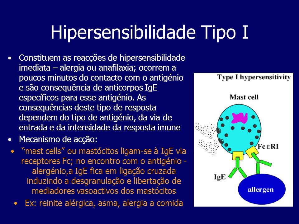 Hipersensibilidade Tipo I alergénio atopiaSeguido o contacto inicial do alergénio com a mucosa á uma complexidade de eventos até a IgE ser produzida e os sintomas ocorrerem após um 2º contacto com o antigénio-alergénio; a resposta IgE dá-se a nível local e envolve a estimulação de células B para a produzirem.