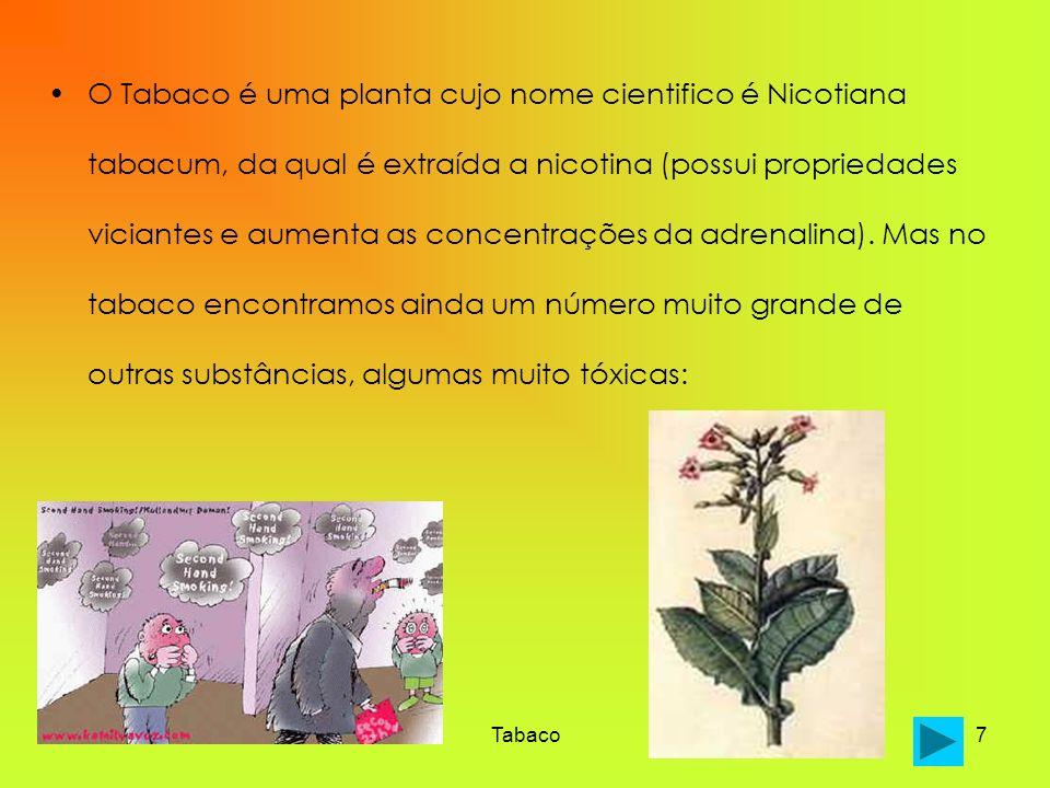 Tabaco7 O Tabaco é uma planta cujo nome cientifico é Nicotiana tabacum, da qual é extraída a nicotina (possui propriedades viciantes e aumenta as conc