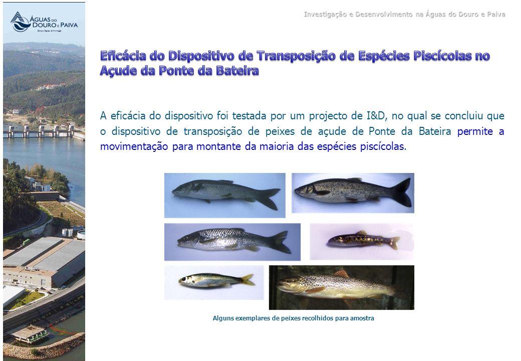 Alguns exemplares de peixes recolhidos para amostra A eficácia do dispositivo foi testada por um projecto de I&D, no qual se concluiu que o dispositiv