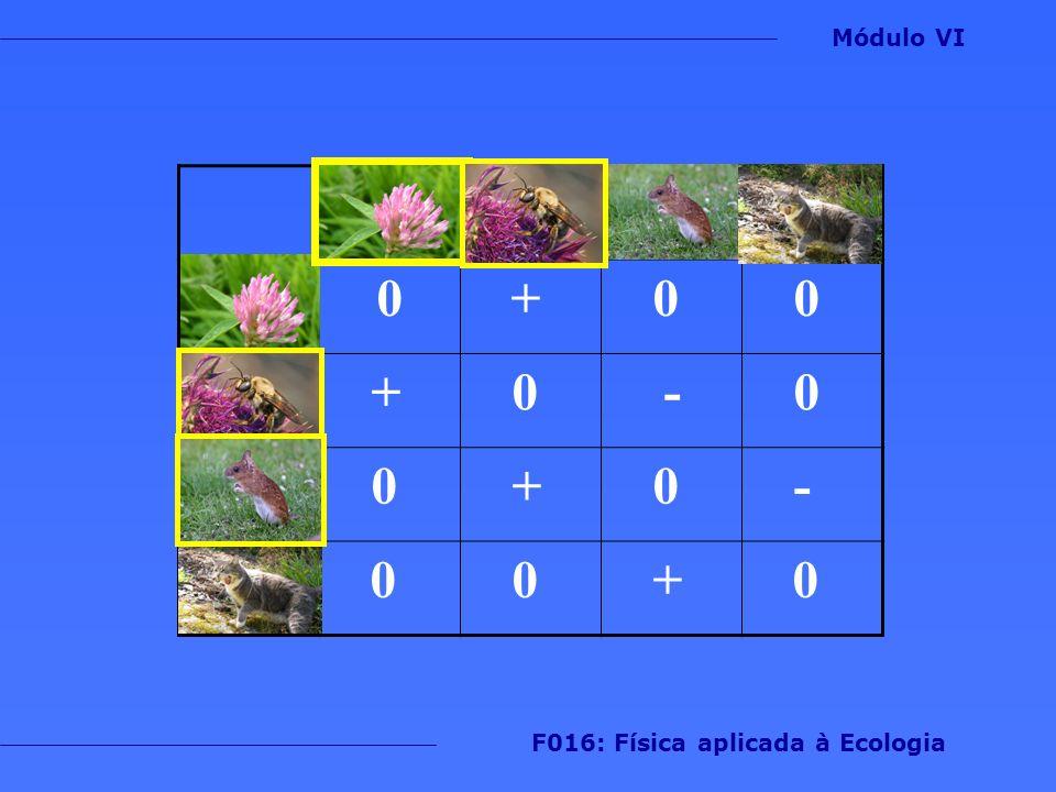 0 + 0 0 + 0 - 0 0 + 0 - 0 0 + 0 Módulo VI F016: Física aplicada à Ecologia