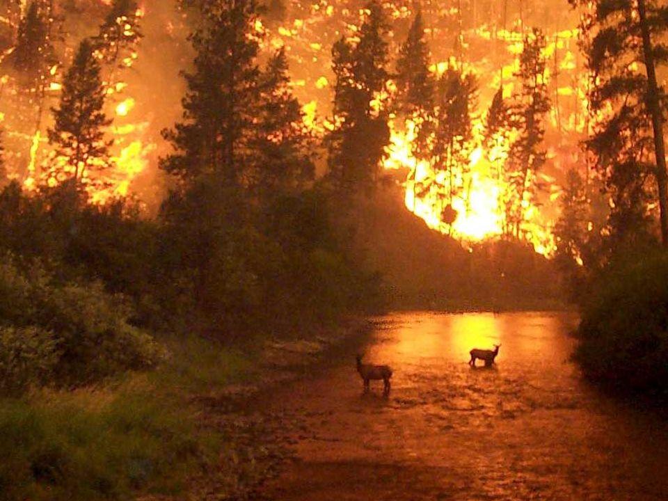 Incêndios Suposições: 1.As árvores estão aleatoriamente distribuídas 2.O incêndio se propaga entre árvores vizinhas 3.O incêndio começa na fronteira da floresta Expectativa: O tamanho do incêndio é proporcional a densidade de árvores Módulo IV F016: Física aplicada à Ecologia